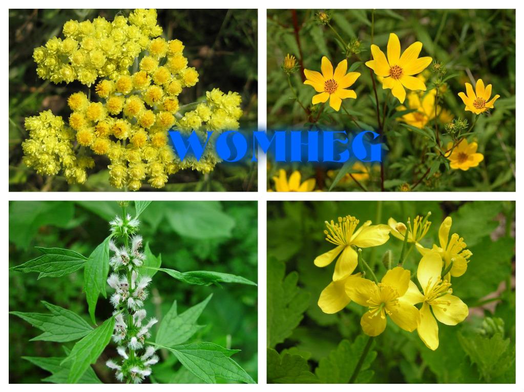 Allergik dermatitin dərman bitkiləri ilə müalicəsi
